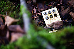 A empty sheet of pills lies in the undergrowth at Aokigahara Jukai, better known as the Mt. Fuji suicide forest, in Yamanashi Prefecture west of Tokyo, Japan. .