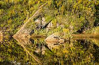 Ship Creek reflections and native rainforest near Haast, West Coast, South Westland, UNESCO World Heritage Area, New Zealand, NZ