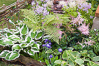 Hosta Patriot, Brunnera Kings Ransom, Astilbe, fern, Tradescantia