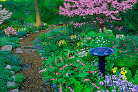 Path through shade garden blooming for spring with blue ceramic birdbath, Midwest USA