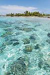 Kauehi Atoll, Tuamotu Archipelago, French Polynesia; turquoise blue water and coral heads in the shallows along the shores of palm tree covered islands on Kauehi Atoll