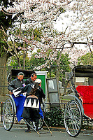 Yanaka Rickshaw with Sakura or cherry blossoms overhead.