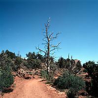 Hiking Trail in Red Rock Country near Sedona, Arizona, USA