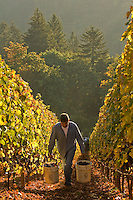 Wine - USA, Oregon