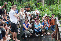A group of tourists photograph an Orangutan  at the Orang Utan Sanctuary Sepilok, Sabah, Borneo