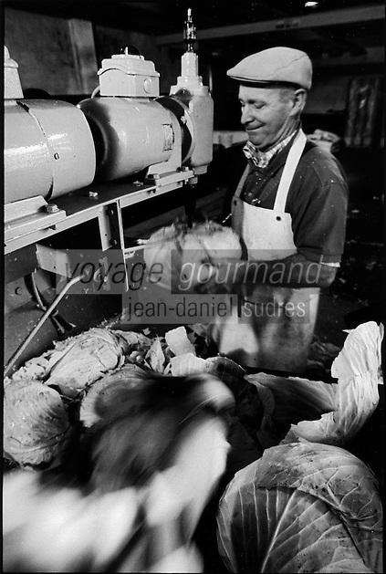 Europe/France/Alsace/67/Bas-Rhin/ Krautergersheim: Une choucrouterie chez Monsieur Pfleger, producteur de choucroute- Enlèvement du trognon des choux  [Non destiné à un usage publicitaire - Not intended for an advertising use]