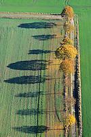 Knicklandschaft in Schleswig Holstein: EUROPA, DEUTSCHLAND, SCHLESWIG-HOLSTEIN, MOELLN (EUROPE, GERMANY), 09.11.2014: Knicklandschaft in Schleswig Holstein