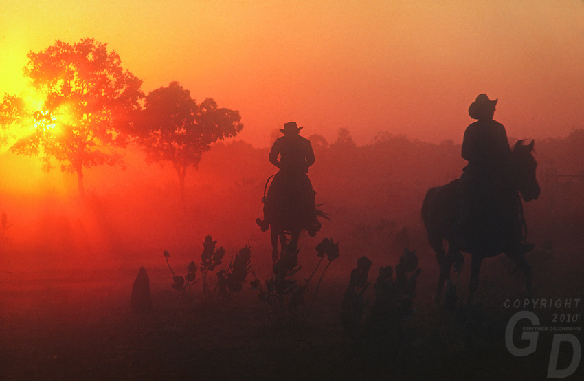 "Stock man on Horseback ""Cowboys"" during Cattle muster in the Northern Territory Outback of Australia"
