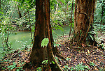 Sarawak, Borneo, Malaysia