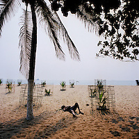 A fisherman sleeps among palm tree saplings on a beach on the Ilha de Luanda..