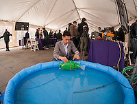 """Ph.D candidate Paul Phamduy's adjusts his robotic fish, built in collaboration with other students, in a pool of water at NYU-Polytechnic School of Engineering's Research Expo in Brooklyn's """"Tech Triangle"""" in New York on Friday, April 24, 2015. Over forty research projects and their creators will exhibit and explain their research including cutting-edge robotics, engineering and biotechnology.  (© Richard B. Levine)"""