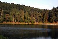 La Valchiusella (o Val Chiusella) è una vallata lungo quasi 25 chilometri, situata nel Canavese, in provincia di Torino. Il torrente Chiusella la attraversa e da il nome alla valle. Lago di Meugliano..Valchiusella (or Val Chiusella) is a valley nearly 25 kilometers long, located in the Canavese, near Turin. The torrent Chiusella crosses the valley and gives the name to it. Meugliano Lake....