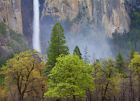 Yosemite National Park, Ca<br /> Mist and spray at the base of Bridalveil Falls above the spring forest of the valley floor