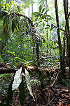 Rainforest in Manu National Park, PERU