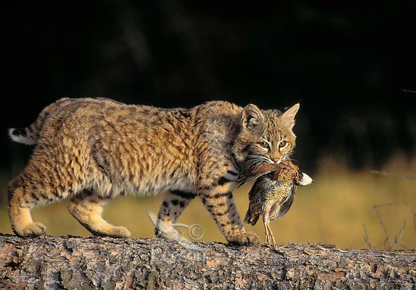 Rufus Cat Food