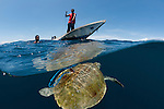 Local fishermen capturing a sea turtle for food.
