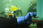 Commercial diver scuba diving underwater photography