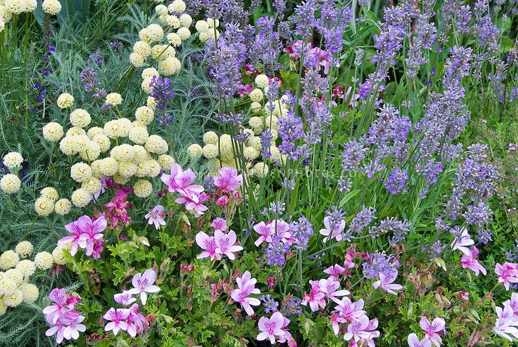 Fragrant garden plants Plant Flower Stock Photography