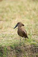 Kazinga Channel, Queen Elizabeth National Park, Uganda, East Africa