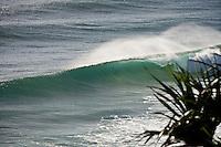 D-Bah line up Australia.  Photo: Joli