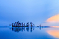 The blue twilight giving way to the orange morning.Cypress trees and reflection captured at Lake Mattamuskeet North Carolina.