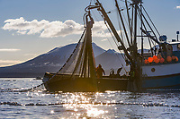 Commercial fishing vessels participate in the first 2006 Sitka Sac Roe Herring fishery opener on the north side of Middle island in Sitka Sound, March 2006.