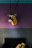 Against the vibrant colour of the living room wall the stuffed head of an oryx hangs above a velvet armchair