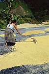 Woman Raking Corn