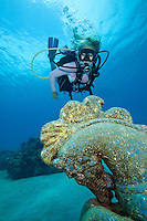Heather Black diving the carousel horse at Cane Bay in St. Croix <br /> United States Virgin Islands