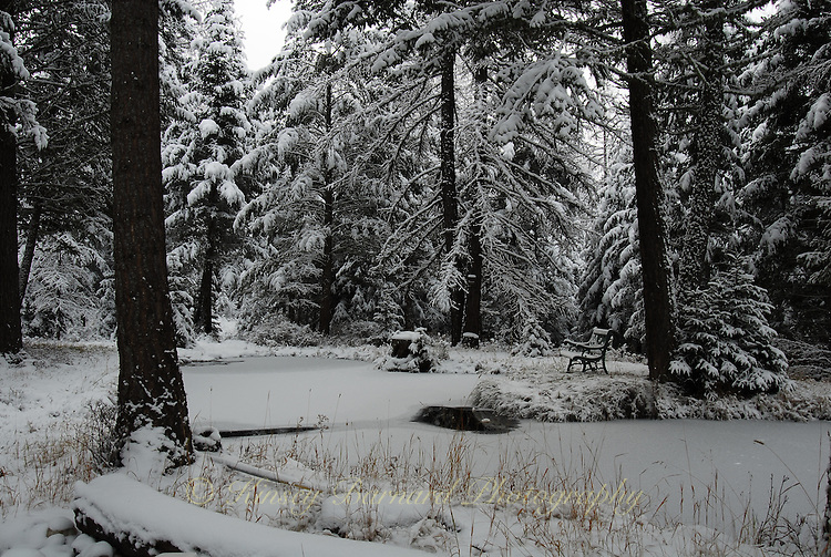 Frozen pond in winter with a snow covered park bench.