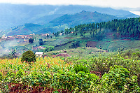 Java, East Java, Batu. Green hills.