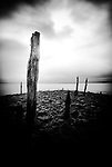 Old wood posts on beach at Holy Island, England