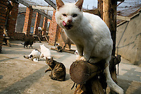 The cats are provided a small farmhouse and a outdoor playing area at Ha Wenjin's no-kill dog and cat rescue farm outside Nanjing, Jiangsu, China.
