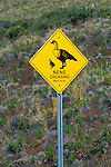 Nene (Hawaiian Goose) crossing sign on the road to Haleakala Crater, Haleakala National Park, Maui, Hawaii USA