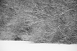 Snow covered ground and bushes of branches in winter.