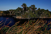 Everglades, Fla. -- Feb. 18, 2007 -- The diverse landscape of the Everglades is seen from Tamiami Trail near Big Cypress Bend just north of Everglades National Park on the southern tip of Florida on Sunday, Feb. 18, 2007.