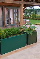 Raised bed vegetable garden with squash, lettuce, herbs, and upscale house