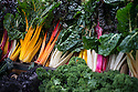 London, UK. 15.11.2014. Rainbow Chard, with other cruciferous vegetables, on a stall at Borough Market. Photograph © Jane Hobson.