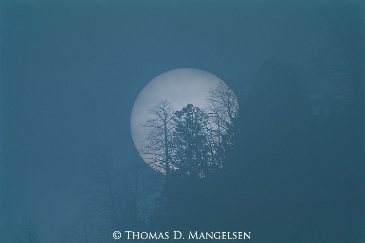 A forest in Jackson Hole, Wyoming silhouetted against a rising full moon.