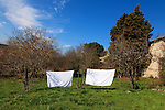 Laundry on a clothes line in the backyard