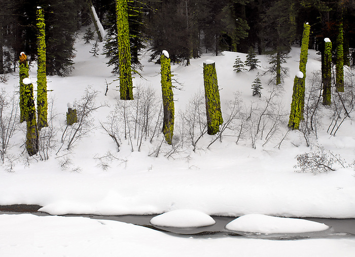 Moss and Snow