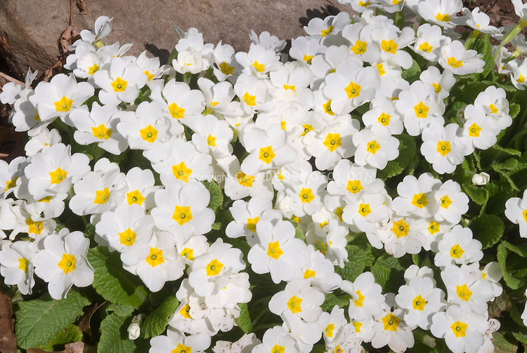 Image result for white flowers