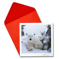 Polar bear &amp; cubs<br />