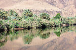 Date palms and bushes with reflections in the Draa river, Draa valley, Morocco.