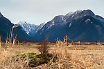 Widgeon Peak and the Coast Mountains in Pitt Meadows, British Columbia, Canada