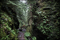BNPS.co.uk (01202 558833)<br /> Pic: WildGuideScotland/BNPS<br /> <br /> Pucks Glen in Argyll.<br /> <br /> Scotland's stunning unspoiled scenery is being shown in a whole new light in a book that reveals the hidden gems off the beaten track north of the border.<br /> <br /> Three young photographers travelled the width and breadth of Scotland and snapped 750 picturesque places which include shimmering lochs, ancient forests, lost ruins, hidden beaches, secret islands, dramatic cliffs, tiny glens and mysterious grottoes. <br /> <br /> Friends Kimberley Grant, David Cooper and Richard Gaston, all in their late 20s, have spent the past two years exploring lesser known idyllic spots which they are keen to bring to a wider audience.