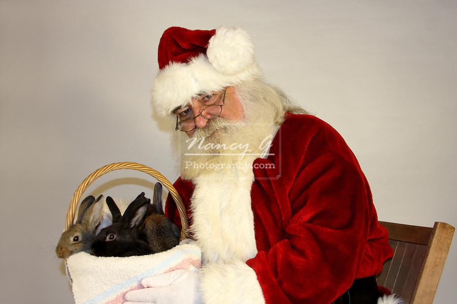 Santa claus with a basket of bunny rabbits nancy