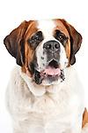 20121129 Karen XXLarge Dogs