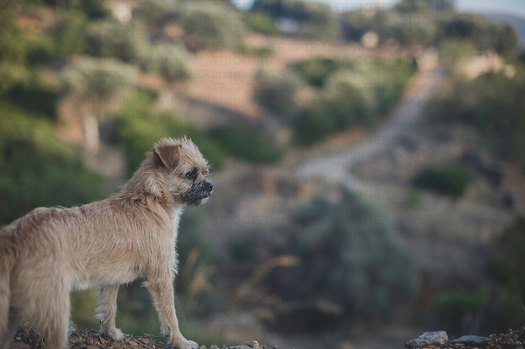 A small terrier dog in Greece