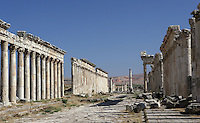 Apamea (Afamia), erected by Trajan (AD 52 ? 117) who ordered its complete reconstruction after the earthquake of AD 115 : View of the ruined colonnade ordered by Marcus Aurelius (AD 161 ? 180) and the temple of Bacchus in the middle. Apamea. Syria Picture by Manuel Cohen